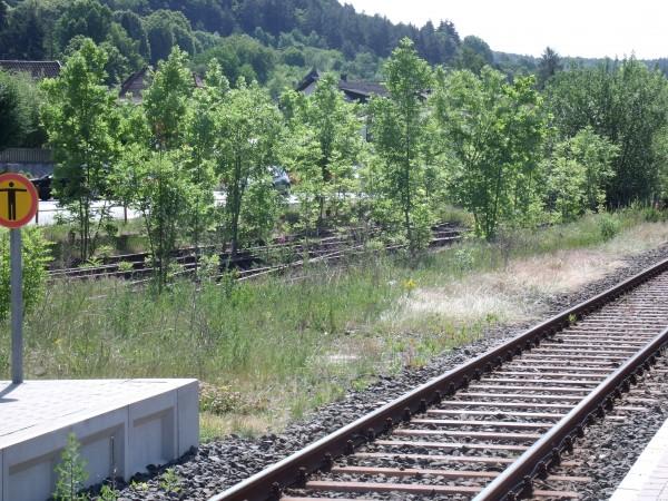 Zwischen den Resten der Weichen für Gütergleise gedeiht der Baumnachwuchs